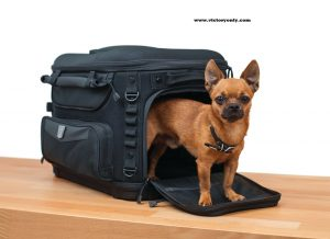 "Grand Pet Palace Take your favorite four-legged family member on the road trip of a lifetime with the safest and most versatile motorcycle pet carrier available. Updated styling, amenities, plus additional ventilation and internal space for your fur baby make the Grand Pet Palace the ultimate home away from home for your pet. An internal frame with rigid structural support offers peace of mind knowing your pet is protected. Dims: 18.5"" wide x 13"" deep x 14"" tall Internal Cubic Inches: 2,700 UV-rated weather-resistant 1200 denier textile material 40% more ventilation with 20% more internal space than previous model New sissy bar strap, multiple D-rings and adjustable straps offer easy, secure mounting options New easy-clean removable foam cushion offers a comfortable ride for your furry friend Pet amenities include internal adjustable leash, two dishes, and removable stash pouch New side-mounted handles plus removable carrying strap offer easy portability Redesigned bottle pocket with MOLLE modular attachment points Internal frame and rigid bottom provides support and protection Top window opens allowing pet to pop its head out Four mesh windows for viewing and optimum ventilation UV-rated weather-resistant 1200 denier textile material with removable rain cover Recommended weight capacity is 20 pounds Fitment: Passenger Seat (With or Without Sissy Bar) or Luggage Rack"