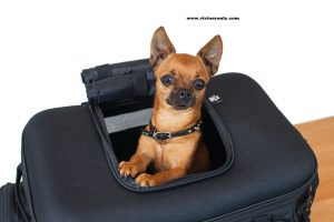 """Grand Pet Palace Take your favorite four-legged family member on the road trip of a lifetime with the safest and most versatile motorcycle pet carrier available. Updated styling, amenities, plus additional ventilation and internal space for your fur baby make the Grand Pet Palace the ultimate home away from home for your pet. An internal frame with rigid structural support offers peace of mind knowing your pet is protected. Dims: 18.5"""" wide x 13"""" deep x 14"""" tall Internal Cubic Inches: 2,700 UV-rated weather-resistant 1200 denier textile material 40% more ventilation with 20% more internal space than previous model New sissy bar strap, multiple D-rings and adjustable straps offer easy, secure mounting options New easy-clean removable foam cushion offers a comfortable ride for your furry friend Pet amenities include internal adjustable leash, two dishes, and removable stash pouch New side-mounted handles plus removable carrying strap offer easy portability Redesigned bottle pocket with MOLLE modular attachment points Internal frame and rigid bottom provides support and protection Top window opens allowing pet to pop its head out Four mesh windows for viewing and optimum ventilation UV-rated weather-resistant 1200 denier textile material with removable rain cover Recommended weight capacity is 20 pounds Fitment: Passenger Seat (With or Without Sissy Bar) or Luggage Rack"""